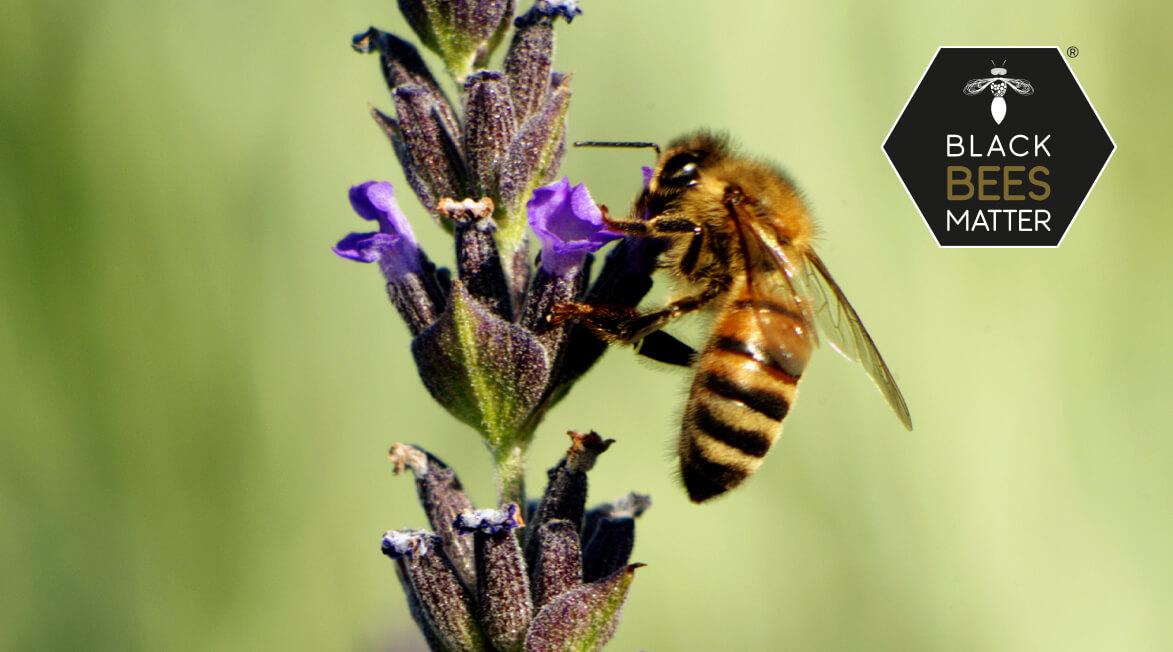 CC LAB e NERO D'APE insieme, in un progetto etico rivolto alle imprese, per la salvaguardia della specie ape nera sicula e per il sostegno agli studi e alla ricerca universitaria di base e sperimentale finalizzata alla cura.
